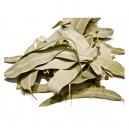 Φύλλα Ευκάλυπτου (15γρ)